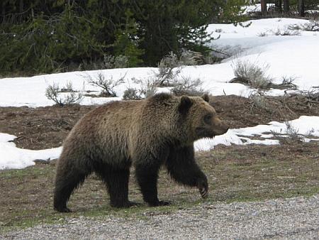 Wes Perkins Bear Attack