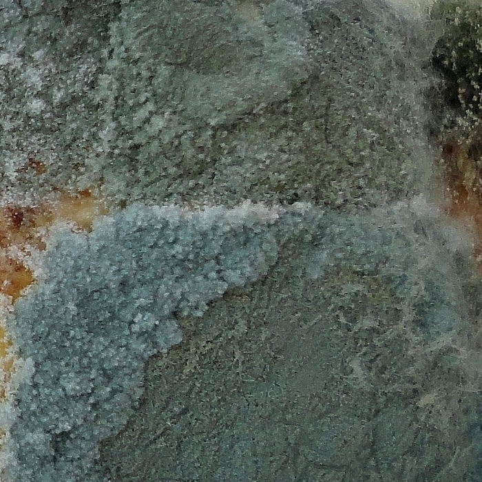 Mould Allergies