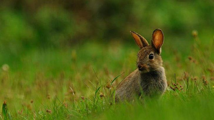 A rabbit in a park
