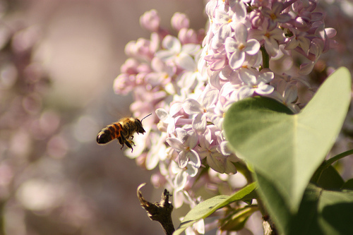 Honey can help relieve headaches