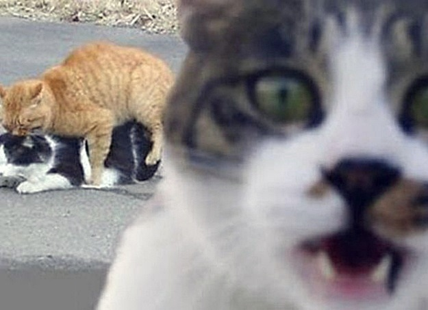 Funny cat photobomb