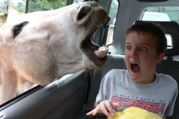 Scared kid photobomb