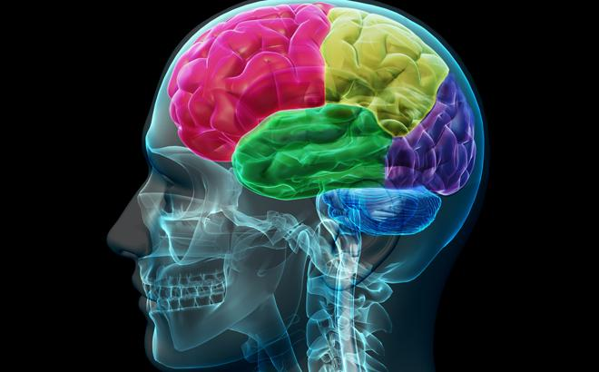 10 Mind-Blowing Facts About Your Brain #10
