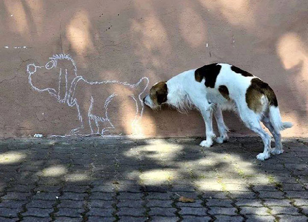Perfectly Timed Dog Photo