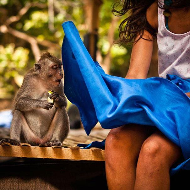 Randy Monkey