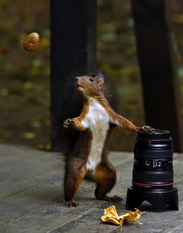 Dancing Squirrel