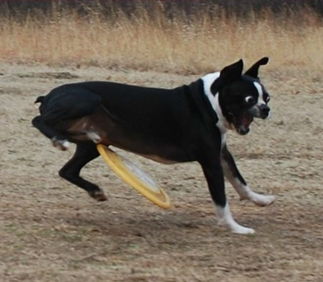 Perfectly Timed Funny Dog Photo